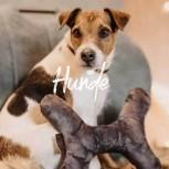 Banner Startseite Hunde